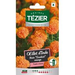 Tezier - Oeillet d'Inde nain Sunkist orange -- Fleurs annuelles