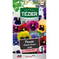 Tezier - Pensée géante Suisse variée -- Fleurs bisannuelles