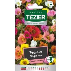 Tezier - Pourpier simple varié -- Fleurs annuelles