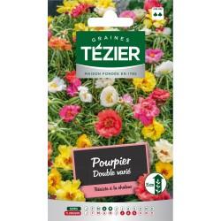 Tezier - Pourpier double varié -- Fleurs annuelles