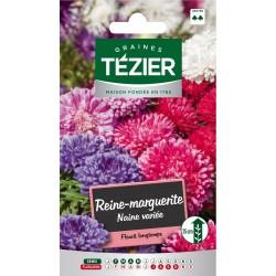 Tezier - Reine-Marguerite naine variée -- Fleurs annuelles