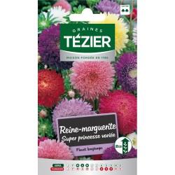 Tezier - Reine-Marguerite Super Princesse variée