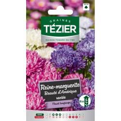Tezier - Reine-Marguerite Beauté d'Amérique variée