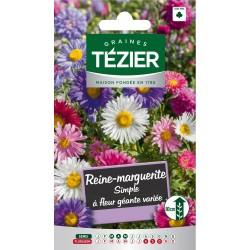 Tezier - Reine-Marguerite simple à fleur géante variée