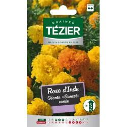 Tezier - Rose d'Inde géante Sunset variée -- Fleurs annuelles