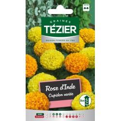 Tezier - Rose d'Inde Cupidon variée -- Fleurs annuelles