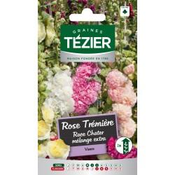 Tezier - Rose Trémière race Chater mélange extra