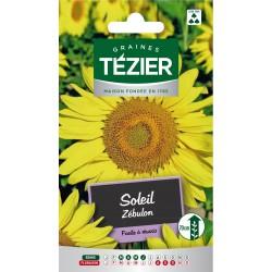 Tezier - Soleil Zébulon -- Fleurs annuelles
