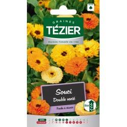 Tezier - Souci double varié -- Fleurs annuelles
