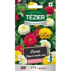 Tezier - Zinnia Elégant double varié -- Fleurs annuelles