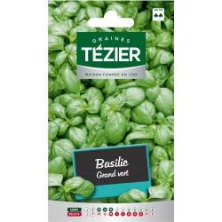 Tezier - Basilic Grand vert