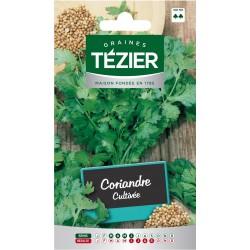 Tezier - Coriandre Cultivée