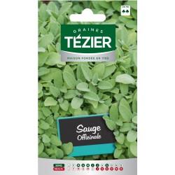 Tezier - Sauge Officinale