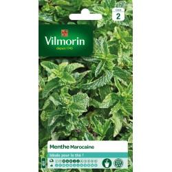 Vilmorin - Menthe Marocaine Vl 2