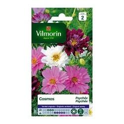 Vilmorin - Cosmos Psyche