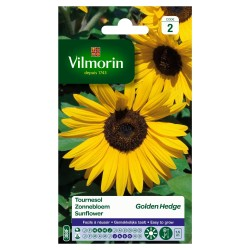 Vilmorin - Tournesol Golden Hedge