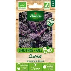 Vilmorin - Chou Frisé - Kale Bio Scarlet