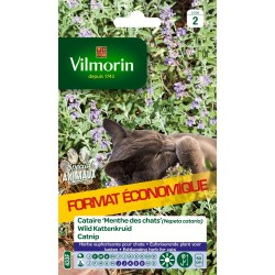 Vilmorin - Cataire Menthe Chats Gm Vl 2