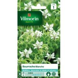 Vilmorin - Bourrache Blanche Vl 1