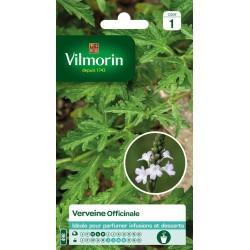 Vilmorin - Verveine Officinale Vl 1