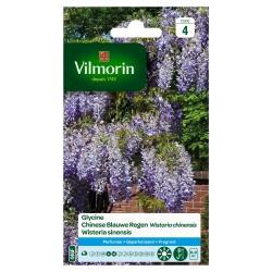 Vilmorin - Glycine
