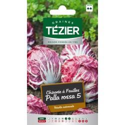 Tezier - Chicorée à feuille Palla rossa 5