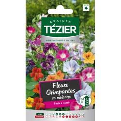 Tezier - Fleurs grimpantes en mélange