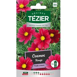 Tezier - Cosmos Rouge -- Fleurs annuelles