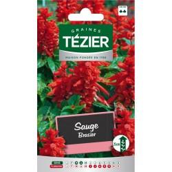 Tezier - Sauge Brasier -- Fleurs annuelles