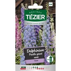 Tezier - Delphinium Pacific géant varié -- Fleurs vivaces