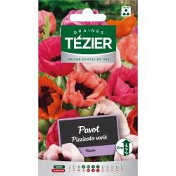 Tezier - Pavot Pizzicato varié -- Fleurs vivaces