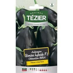 Tezier - Aubergine Bonica HF1 obtention INRA