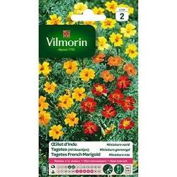 Vilmorin - Oeillet d'Inde Miniature Mixée