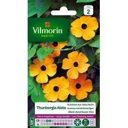 Vilmorin - Thunbergia Alata