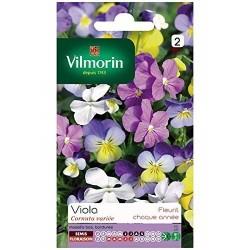 Vilmorin - Viola Cornuta Mix