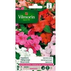 Vilmorin - Imapatiens Hybride Mixé