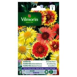 Vilmorin - Gaillarde Vivace Mix