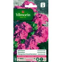 Vilmorin - Geranium Eclat Rose