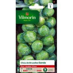 Vilmorin - Chou Bruxelles Sanda Vl 1