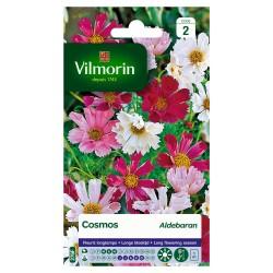 Vilmorin - Cosmos Aldebaran Mix