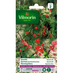Vilmorin - Ipomée Quamoclit