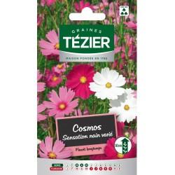 Tezier - Cosmos Sensation nain varié -- Fleurs annuelles