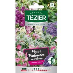 Tezier - Fleurs parfumées en mélange -- Fleurs annuelles