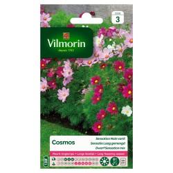 Vilmorin - Cosmos Sensation Nain