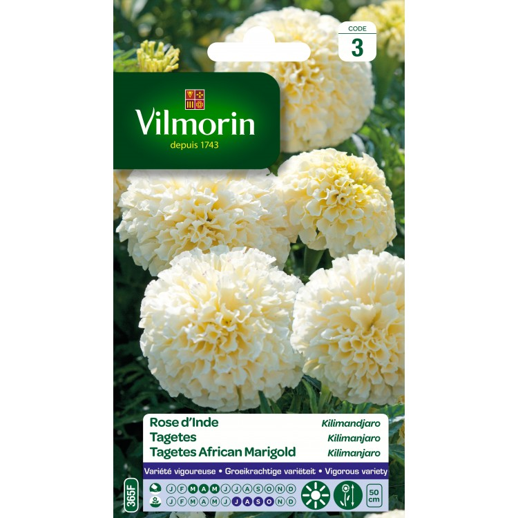 Vilmorin - Rose d'Inde Kilimandjaro blanche