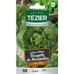 Tezier - Laitue d'Hiver Rougette de Montpellier (G,N,)