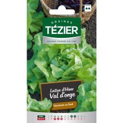 Tezier - Laitue d'Hiver Val d'Orge (G,B,)