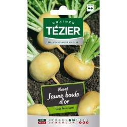 Tezier - Navet Jaune boule dor