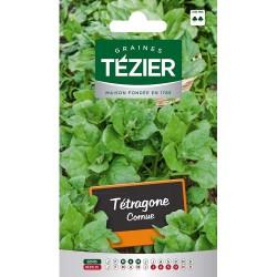 Tezier - Tétragone cornue