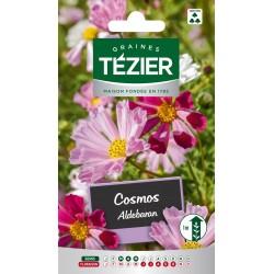Tezier - Cosmos Aldebaran Fleurs annuelles